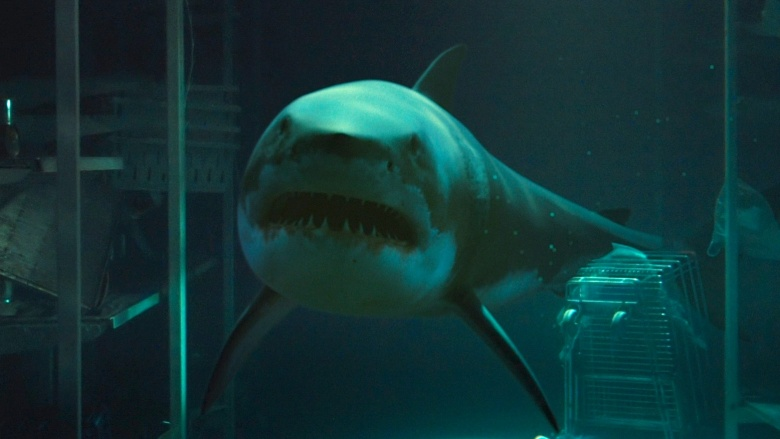 Best Shark Movies