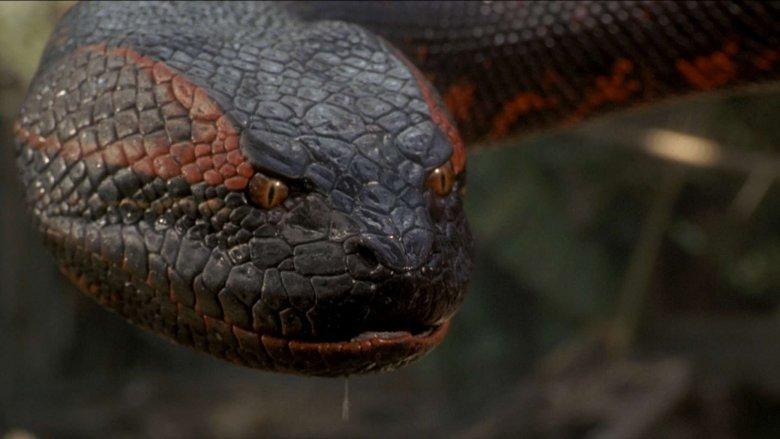 The snake in Anaconda